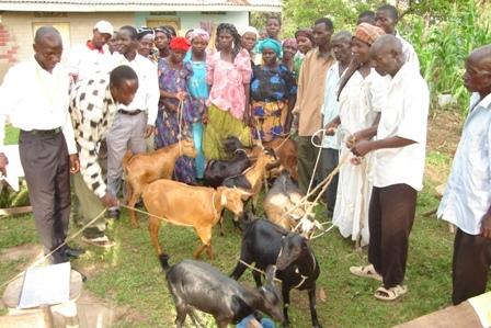 Eden Goat Project Program